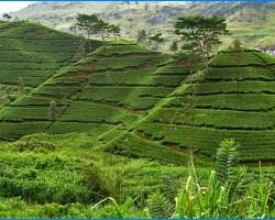 Остров Шри-Ланка – место для наслаждения жизнью