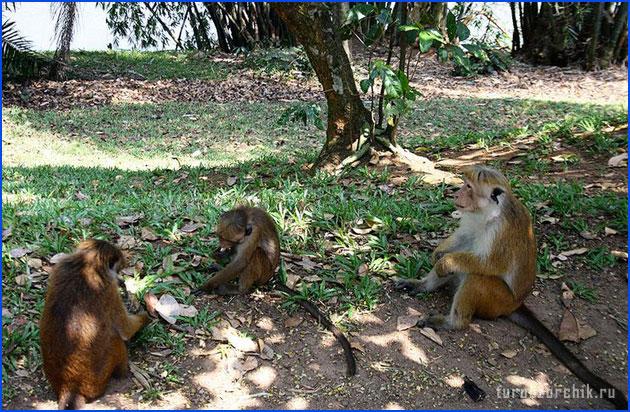 безопасность-на-Шри-Ланка-3